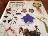 Πανοραμικό Λεξικό Τα Φυτά